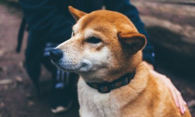 Dogecoin [DOGE] is now available on Coinbase Wallet